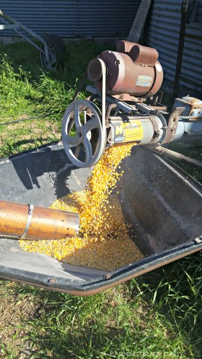 Corn 2016