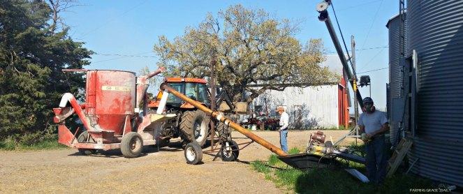 Corn grinding 2016