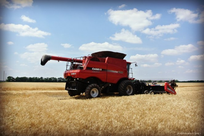 Case IH combine 6088 wheat harvest