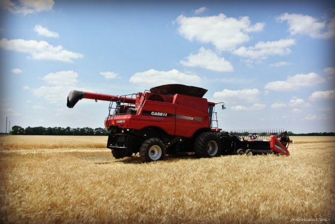 Case IH combine 6088 wheat harvest
