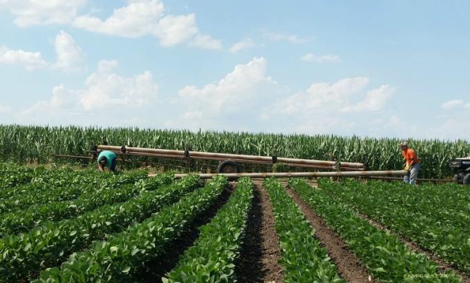 Farm marraige 2 soybeans