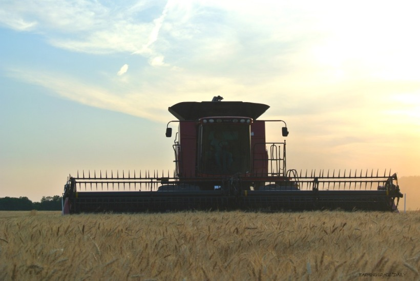 Farmer harvesting wheat case ih 2016 reduced