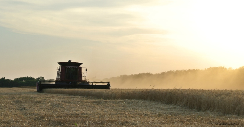 Kansas Wheat Harvest 2016 Julie Vogts