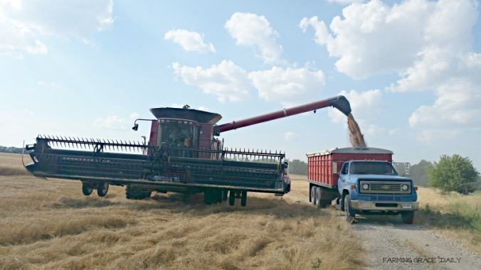 Nutter Wheat Harvest