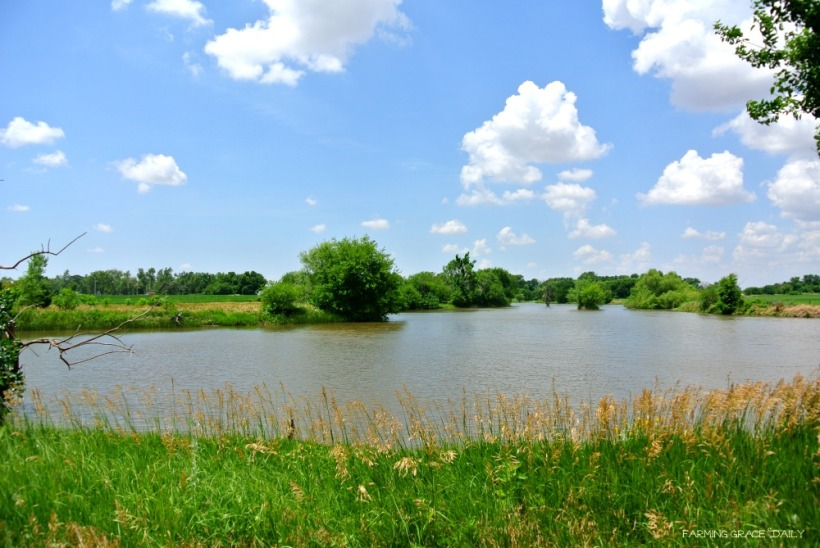Pasture pond