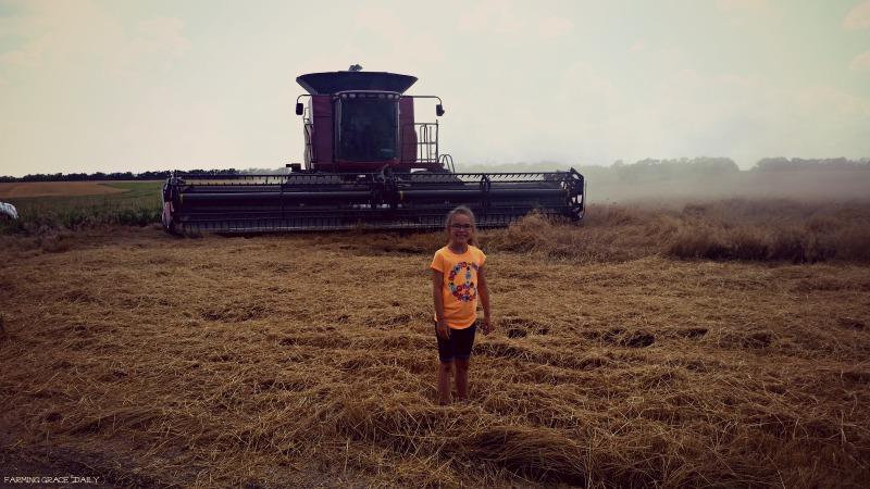 PV Field Wheat