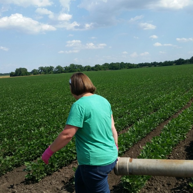 soybeans farm wife