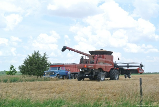 wheat harvest 2016