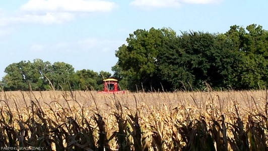 corn-harvest-2016-farver