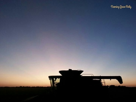 case ih sunset farm