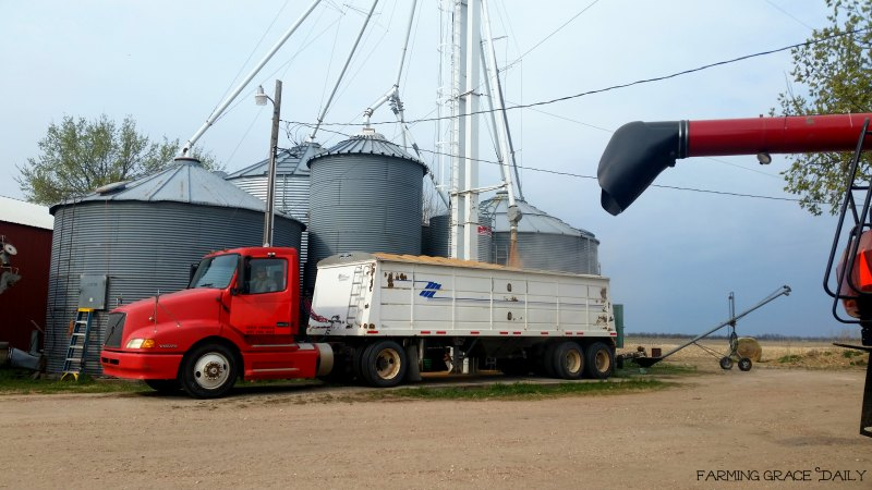 Wheat hauling 2017 March