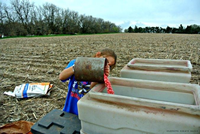 farmkid corn seed