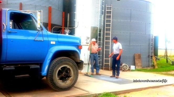 2014 RV MV Wheat harvest