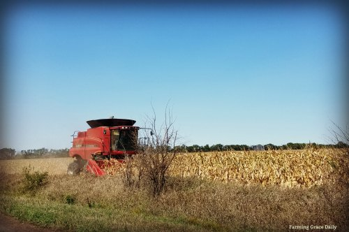 corn harvest 2017 two
