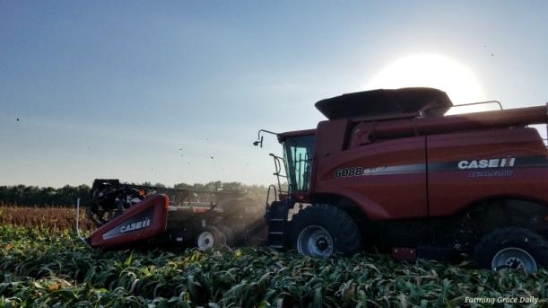 milo harvest 2017 caseih