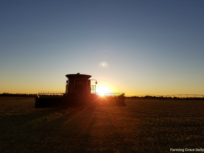 Case Combine Sunrise field