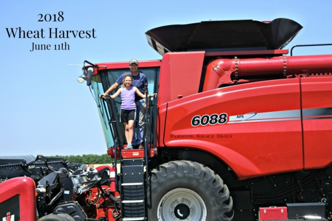 2018 wheat harvest annual pic