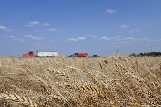Wheat view Eddies Trucks