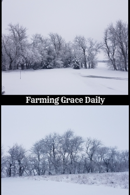 farming grace daily (1)